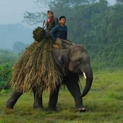 Мясо слонов мешало человеку эволюционировать