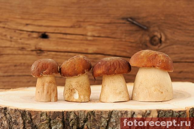 белые грибы на пеньке